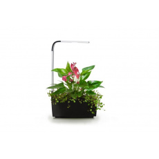 Tregren T6 Kitchen Garden smart květ.Bl