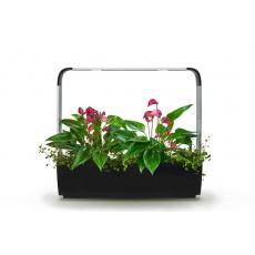 Tregren T12 Kitchen Garden smart květ.Bl