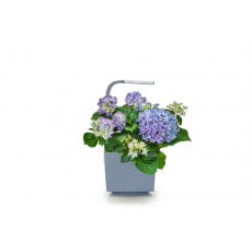 Tregren T3 Kitchen Garden smart květ.GY